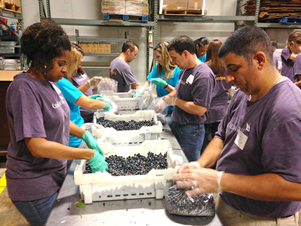 Volunteers Sort Blueberries