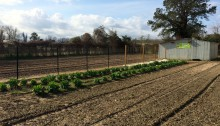 Photo of New Bern Garden