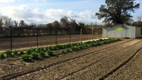 Photo of New Bern Garden