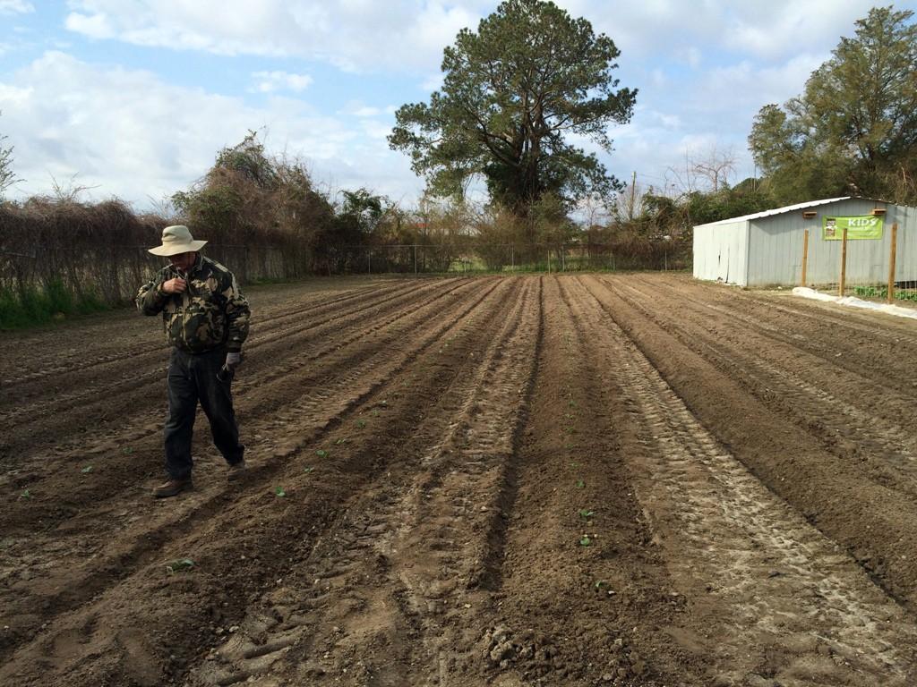 Photo of volunteer walking in field