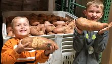 sweet potatoes in a plastic produce bin